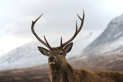 why do deer lose their antlers sciencing