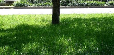 how to grow grass in backyard 37 best images about landscape front and back yard on