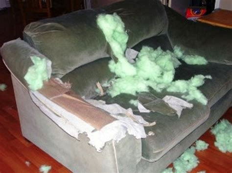 my couch my dog ate my couch