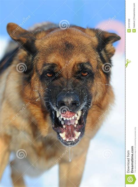 mad puppy mad stock photography image 24101332