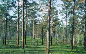 cheap good wood woodworking blog  plans