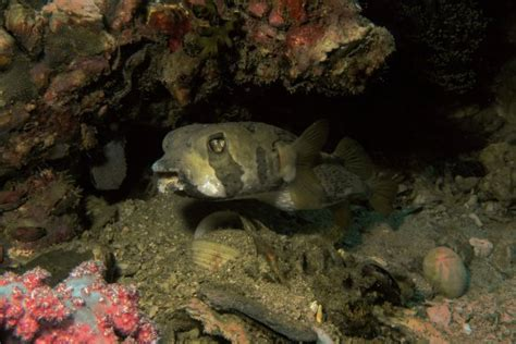the dive ao nang diving at phi phi island with the dive aonang picture of