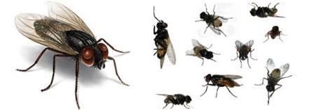 Flies In House by House Flies Www Pixshark Images Galleries With A Bite