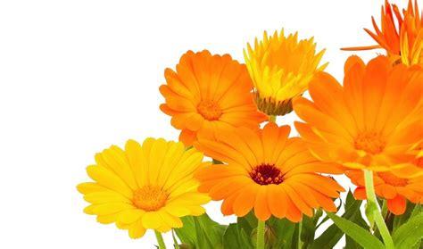 imagenes flores naranjas flores naranjas