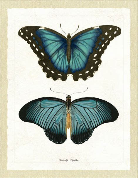antique butterfly vintage butterflies betterflies butterfly