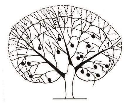 periodo potatura limone in vaso quando potare gli agrumi agrumi agrumi agrumi agrumi