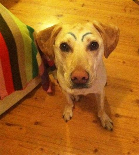 eyebrows on dogs dogs with eyebrows barnorama