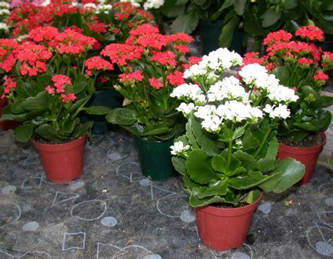 Hiasan Pot Anggrek contoh tanaman hias untuk taman minimalis tanaman hias