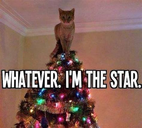 Merry Christmas Cat Meme - christmas kitten funny pictures quotes memes jokes