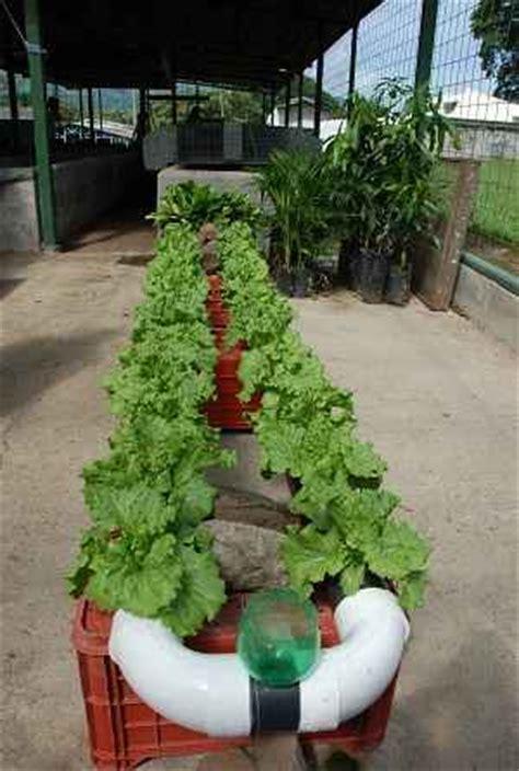 Indoor Winter Vegetable Garden How To Grow Vegetables Indoors In Winter