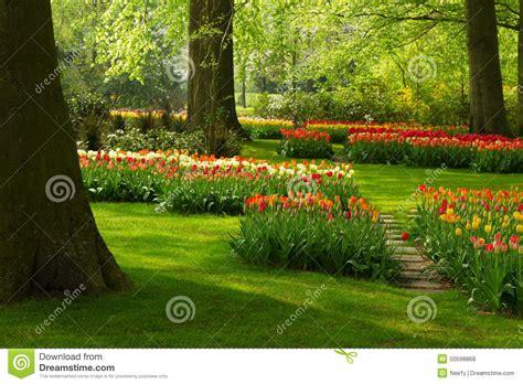 ci di fiori in olanda fiori della primavera nel parco dell olanda fotografia