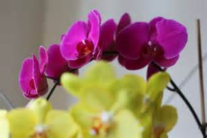 plants that don t need water plants that don t need soil but stones water ehow uk