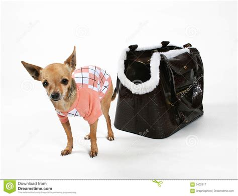 preppy puppy preppy royalty free stock photography image 3402617