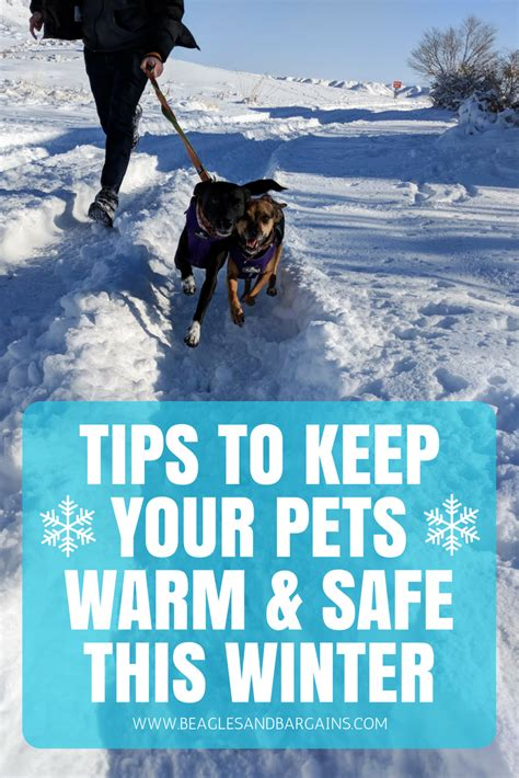 7 Tips On Keeping Your Safe by Tips To Keep Your Pets Warm Safe This Winter Beagles