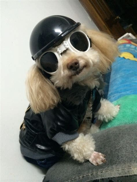 puppy helmet buy wholesale helmets from china helmets wholesalers aliexpress