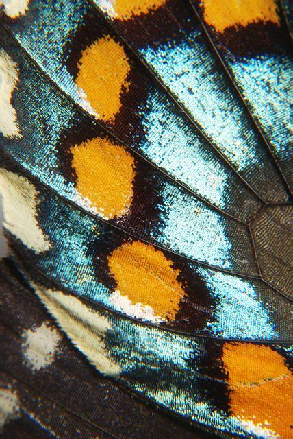 Almost Wing micro of butterfly wing almost looks like fabric