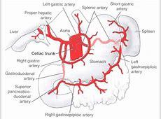 Gastric Vascular Anatomy