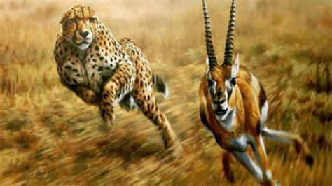 predator and prey www pixshark images galleries