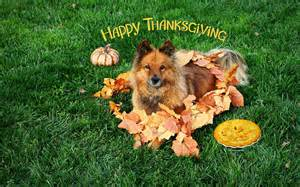 dogs thanksgiving gallery for gt thanksgiving dog wallpaper