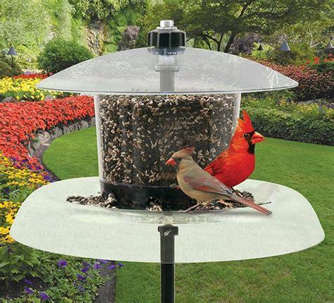jagunda squirrel proof bird feeder jg droll yankees