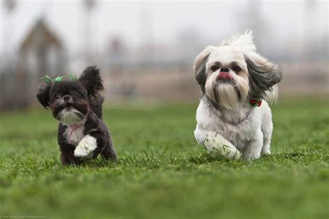 r for dogs second best pic of 8 virginia hiramatsu s dogs l r miss flickr