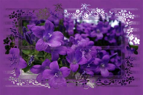 imagenes hermosas variadas flores bonitas en movimiento im 225 genes bellas 2