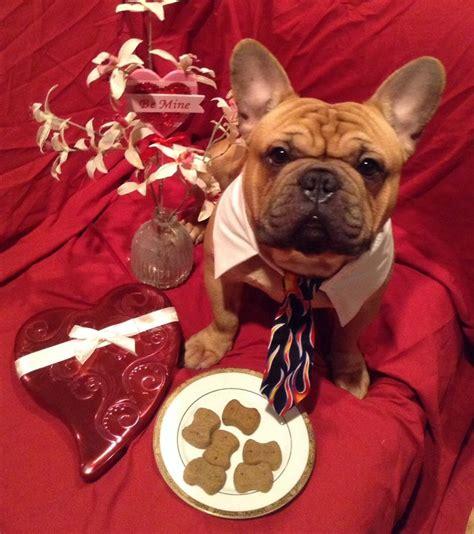 valentines day bulldog happy s day frenchie