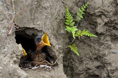 Tempat Pakan Burung Lb panduan awal penangkaran burung decu om kicau