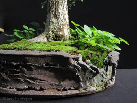 bonsai planter 64 best images about bonsai pots on pinterest ceramics