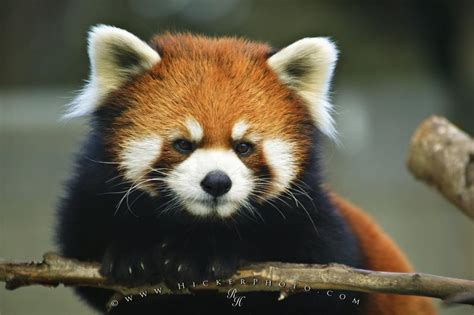 animals pictures  wallpapers  wow style