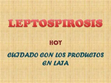 Leptospirosis Card Template by Presentacion Leptospirosis Authorstream