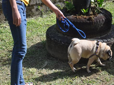 dog backyard leash how to make your dog stay in your yard without a leash 5