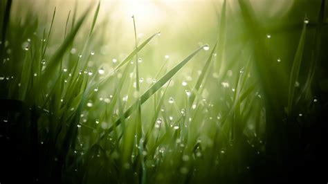 wallpaper grass  hd wallpaper green drops dew sun rays nature