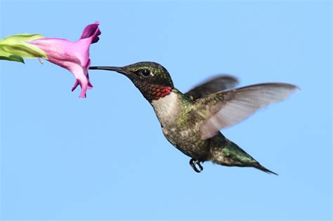 what google s hummingbird algorithm means for small business