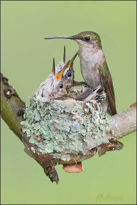 17 best images about bird nests of northern america on