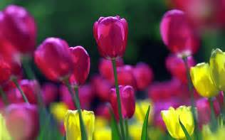 Flower Spring by Wallpapers Spring Flowers Wallpapers
