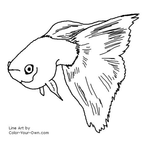 coloring pages of freshwater fish fancy guppy coloring page
