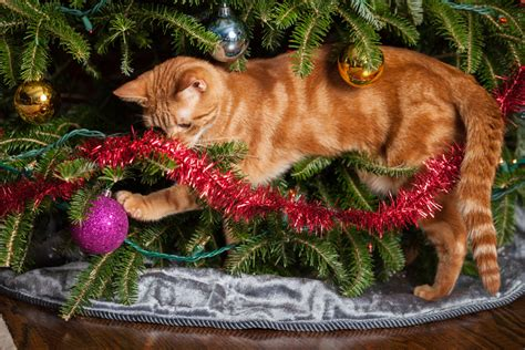 protect christmas tree from cat how to protect your pets from hazards deerfield veterinary hospital