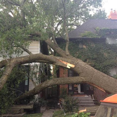 a tree fell on my house toronto star