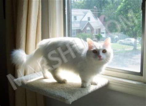 petsmart cat window seat cat window seat