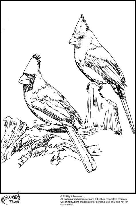 Cardinal Coloring Pages american cardinal coloring pages team colors