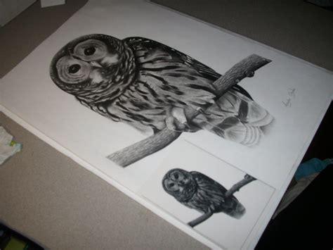 dibujos realistas buho lechuza por angela710 dibujando