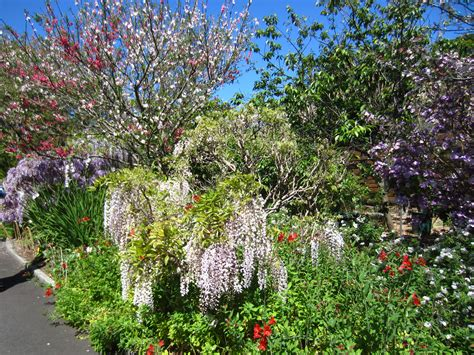 the botanic gardens sydney walk at the sydney royal botanic garden sydney