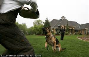 dogs for house protection executive protection dogs now come with a 230 000 price tag daily mail online