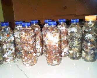 Paket Black Opal Jarong Banten kalimaya batavia