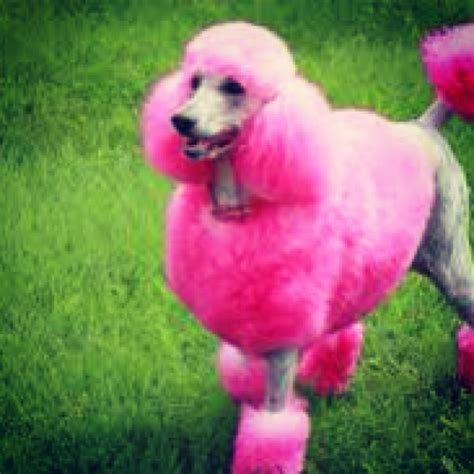 pink dogs 1000 images about pink on cara delevingne creative grooming and doggies