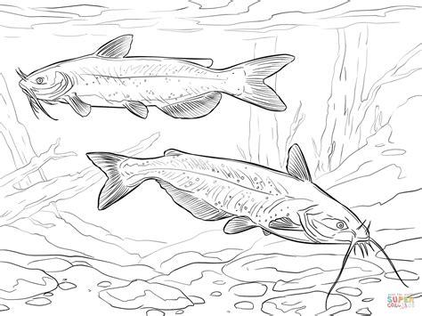 catfish coloring page catfish 18 coloring page supercoloringcom sketch coloring page