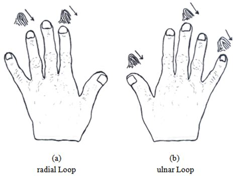pattern deviation definition fingerprint patterns and the analysis of gender
