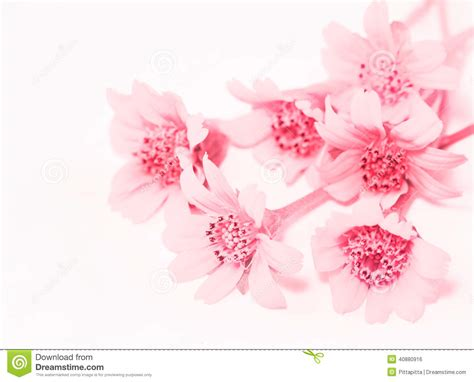 flower background stock photo image of poster background