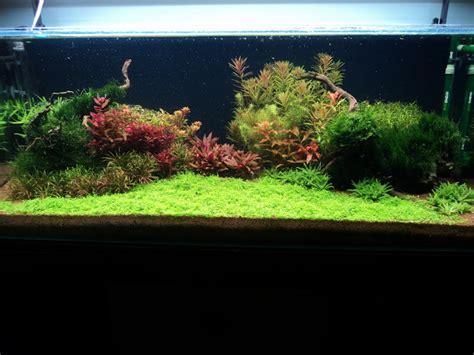 Timer Lu Aquascape incercare aquascaping jurnal acvariu stefanp 2012 2013